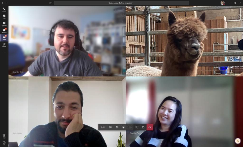 Teams-Videokonferenz mit Kollegen und Alpaka
